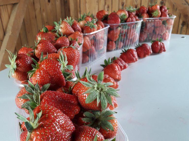 Ohlsdorf dating berry Singles umgebung mariatrost